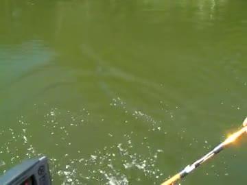 TREVECCA NAZARENE UNIVERSITY - WALTERS   LAWSON000 - Lake Chickamauga - 1 - video  6