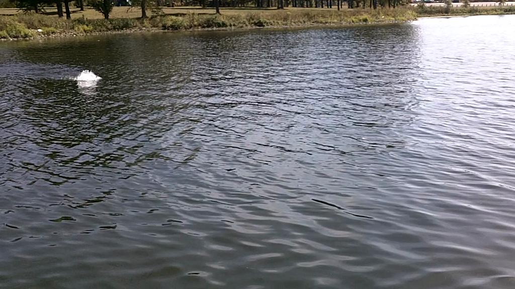 INDIANA UNIVERSITY - VAAL   BRESSLER000 - Central Regional - Lake Kinkaid - 1 - video  3
