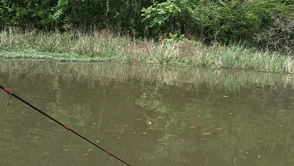 AUBURN UNIVERSITY OF MONTGOMERY - STROCK   DARNELL00 - Lake Seminole - 1 - video  14