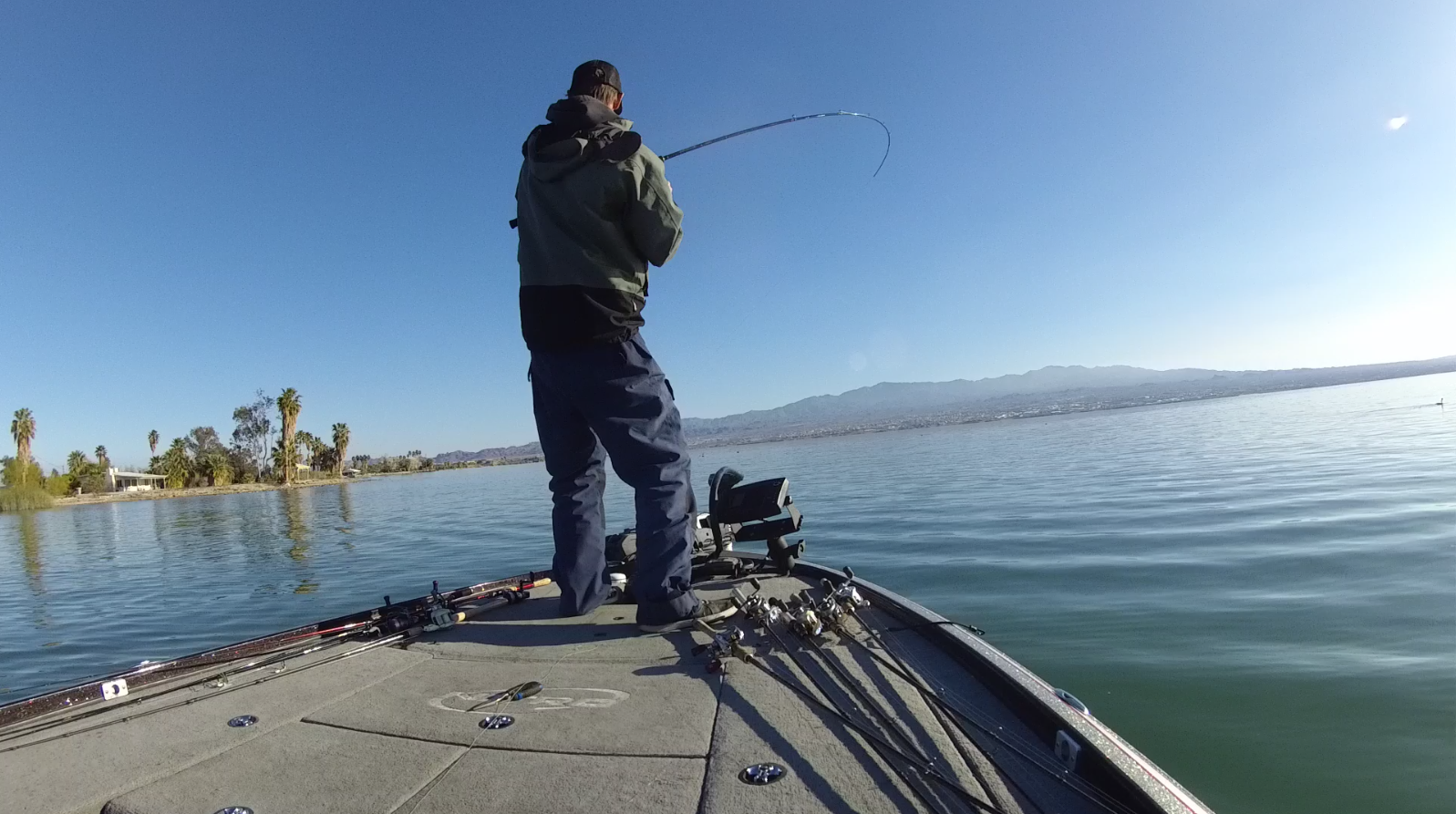 Lake Havasu iON Fish Catches