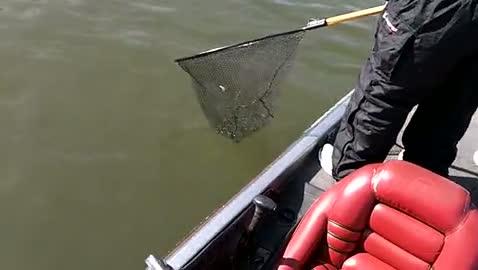 UALR - GEPHARDT   NORMAN000 - Kentucky Barkley Lake - 1 - video  8