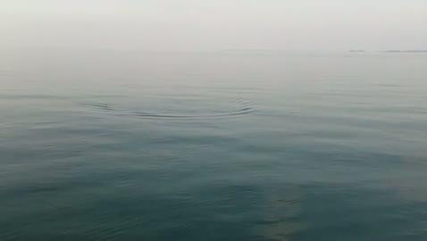 EASTERN ILLINOIS UNIVERSITY - TOOMER   BUEHNERKEMPER000 - Detroit River - 1 - video  3