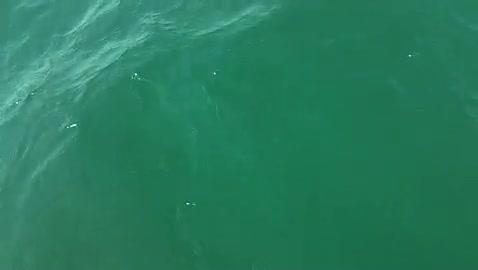 RAMAPO COLLEGE - RIEDER   VOSS00 - Lake Erie - 1 - video  17