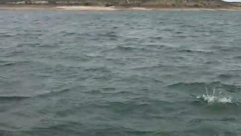 BAYLOR UNIVERSITY - GARLAND   BAUER000 - Lake Amistad - 1 - video  6