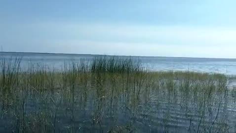 AUSTIN PEAY - LYONS   GENZ000 - Lake Okeechobee - 1 - video  7