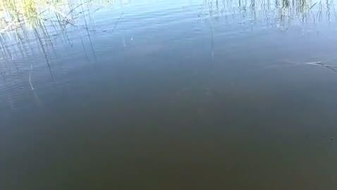 GEORGIA COLLEGE - HENRY   KELLY000 - Lake Okeechobee - 1 - video  7