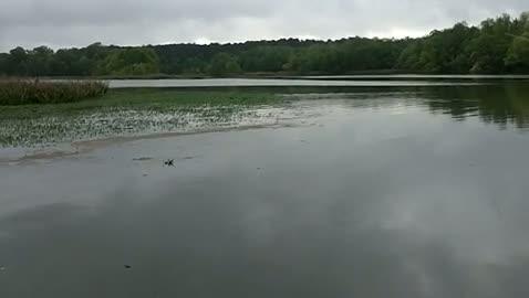 UNIVERSITY OF ALABAMA - KIRKLEY   CONNELL00 - Lake Seminole - 1 - video  11