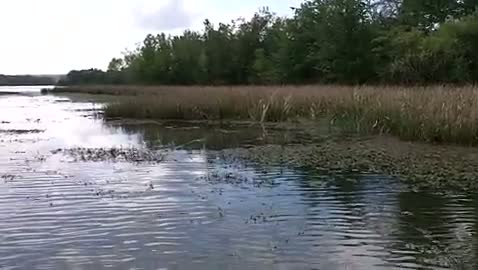 UNIVERSITY OF ALABAMA - KIRKLEY   CONNELL00 - Lake Seminole - 1 - video  18