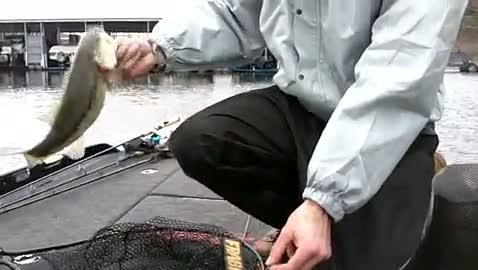 UW- STOUT - HELKE   ANIBAS000 - Table Rock - 1 - video  6