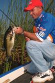Kellogg's pro Clark Wendlandt reels in another keeper at the 2004 Lake Okeechobee FLW Tour event.