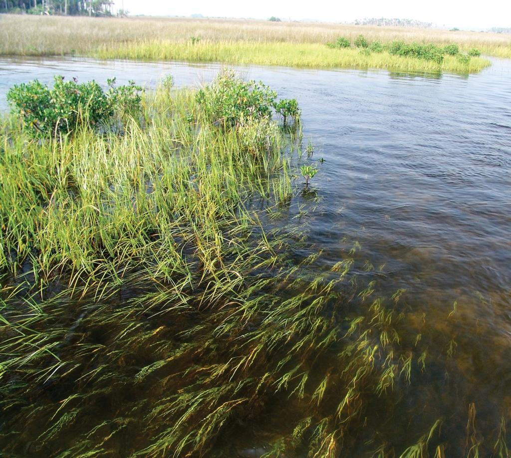 Ten tidal tips for redfish flw fishing articles tidal creeks on the east coast typically experience significant tidal fluctuations nvjuhfo Choice Image