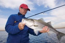 All stripers, especially big ones, feed aggressively before winter arrives.