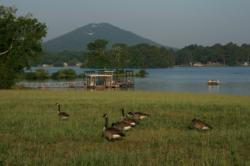 Canada geese foraging on a hill overlooking the launch site mirrored the challenging task of rounding up a limit of bass.