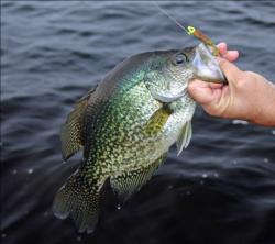 Small jigs, often tipped with minnows are the common offering for crappie.