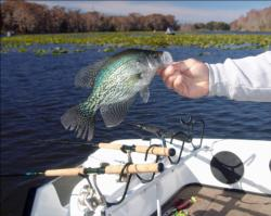 Multiple rods set on either side of the outboard engine allow anglers to troll, or