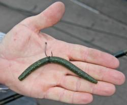 Wacky-rigged Senkos will be one of the more common baits for pros and co-anglers on Lake Champlain.