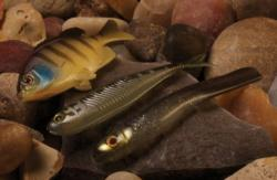 Jackall Clone Gill, Clone Fry and Super Cross Tail Shad