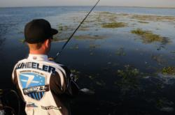 Jacob Wheeler samples some mats during practice for the EverStart event on Lake Okeechobee.