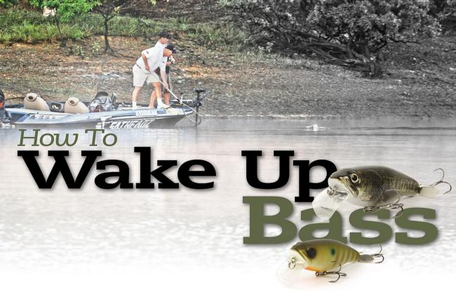 /tips/2013-04-02-how-to-wake-up-bass-