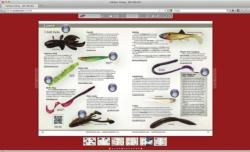 FLW Bass Fishing magazine digital edition.