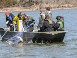 Considering that 50- or 75-pound carp routinely tear up nets worth about $350, many commercial fishermen aren't too keen on making sets in areas where they know the fish abound.