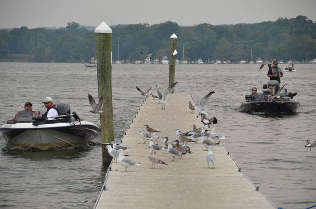 Swarms of seagulls flee the dock as EverStart boaters return to the marina after a hard day of fishing on the Chesapeake Bay.