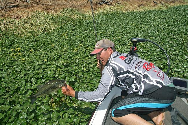EverStart pro Zach Thompson hauls out his catch from a dense mat of pennyworts.