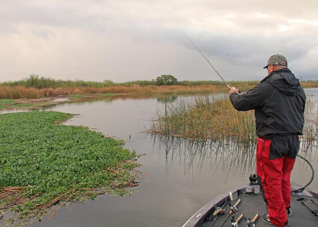 EverStart pro Ken Mah often targets blended habitat on the Delta.
