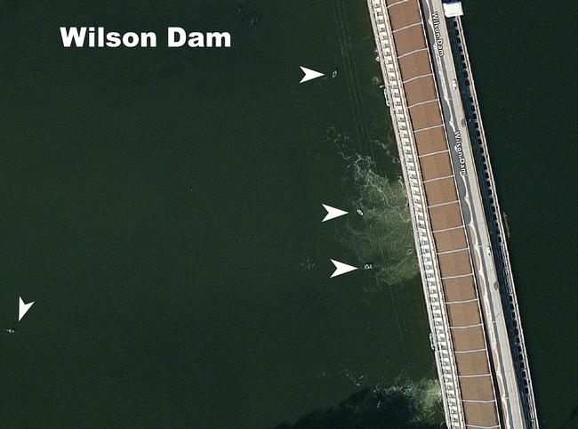 The Wilson Dam is a popular fishing location all year long. Tournament anglers can find schools of bass grouped up in the tailwaters of the dam during the summer months.