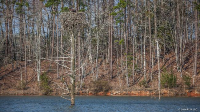 Standing timber poses a navigational hazard in many of the creeks and backwaters on Russell.